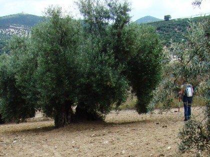 Prospección arqueológica en Cuevas Bajas, Málaga