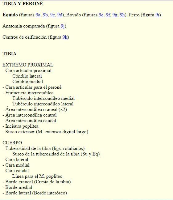 tibia-perone-atlas-osteologia